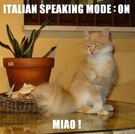 Italiaanse_kat_miao
